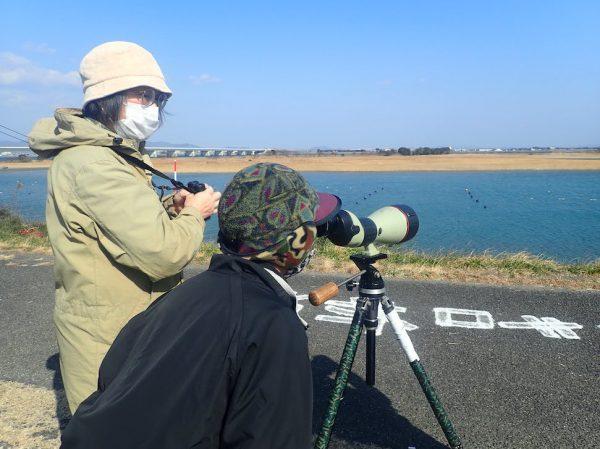 吉野川河口は、渡鳥の楽園!